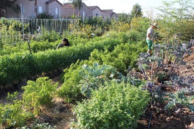 Community garden in Pomona