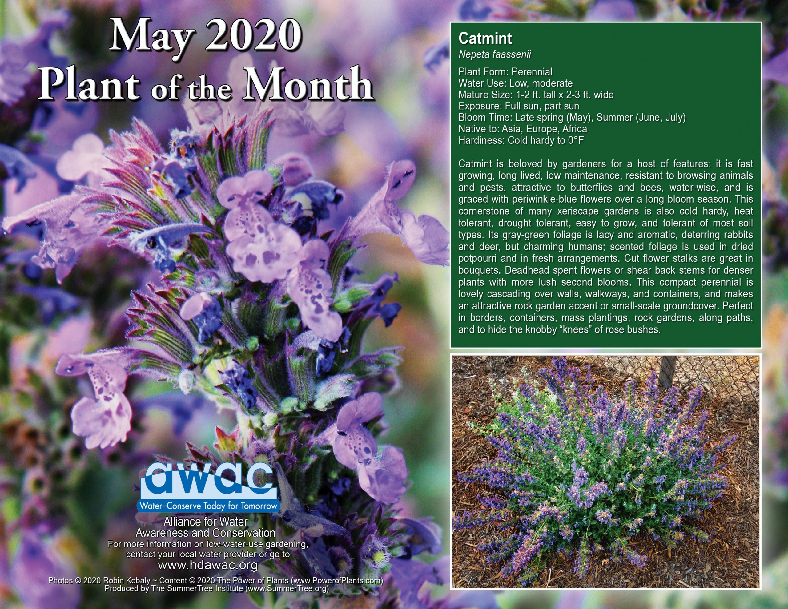 May 2020 Plant of the Month