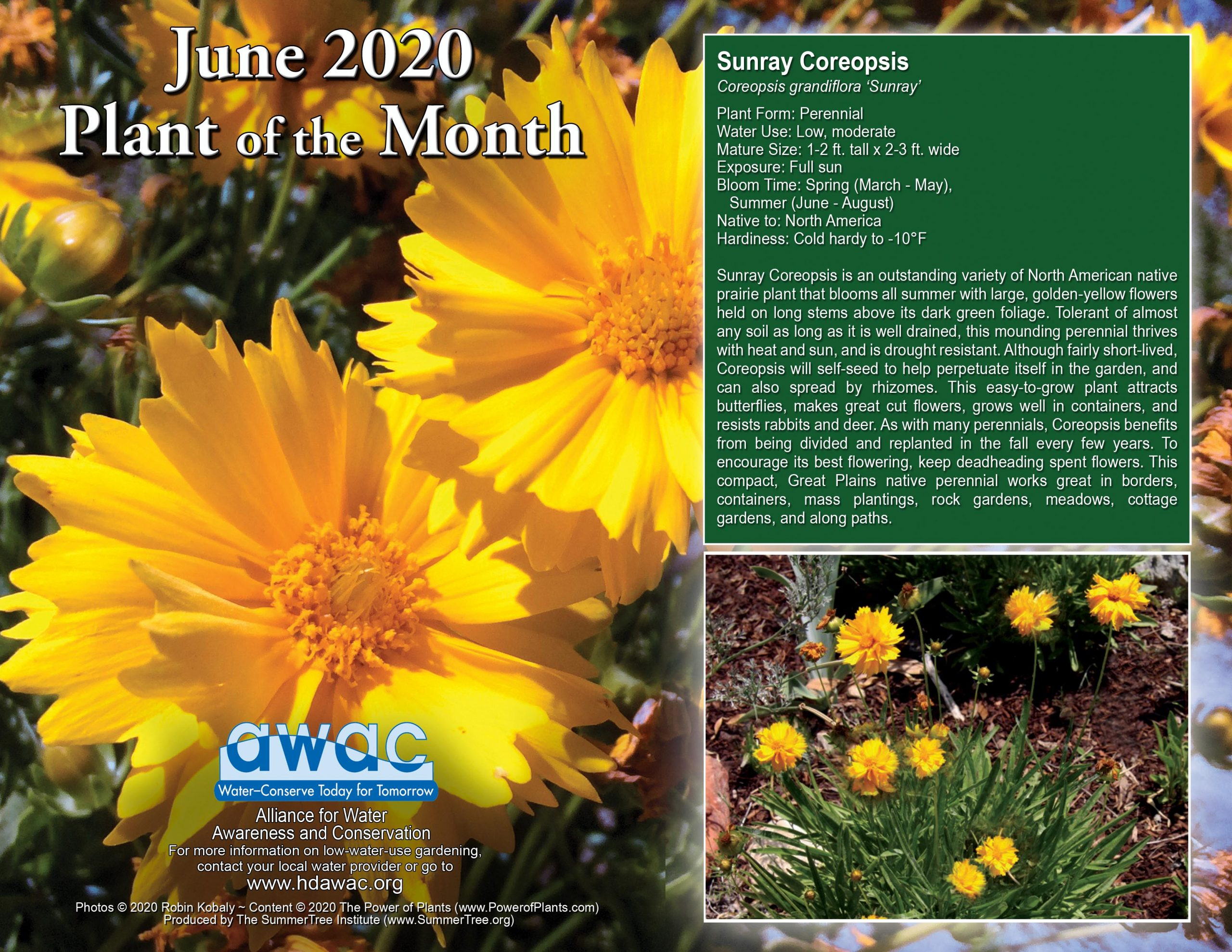 AWAC June 2020 Flower of the Month
