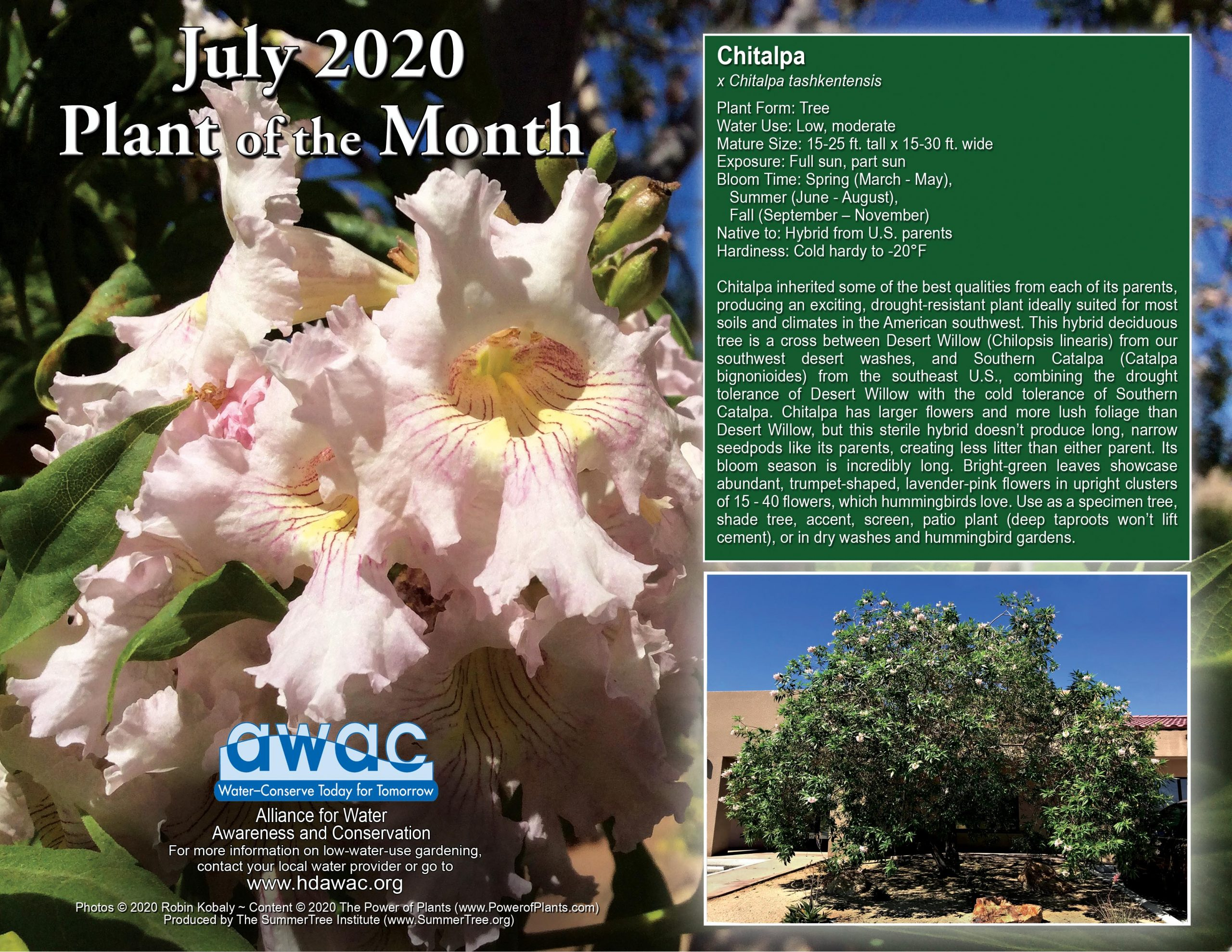 AWAC July 2020 Plant of the Month