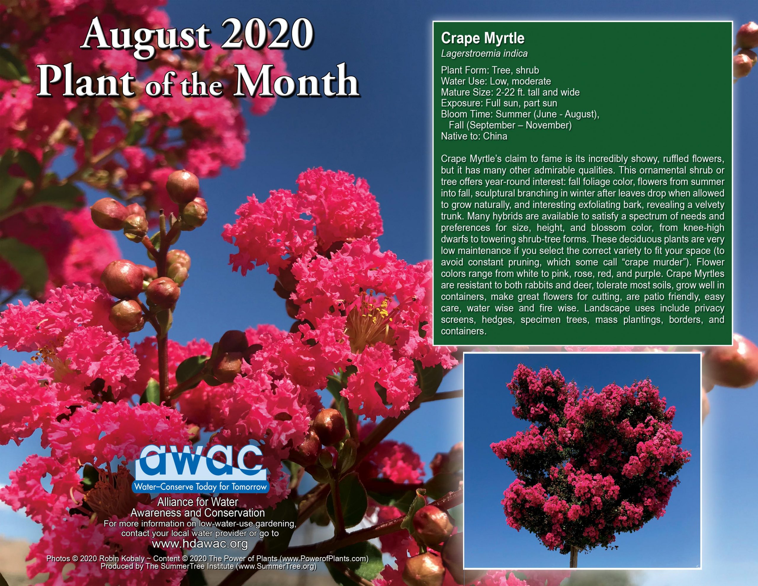 AWAC August Plant of the Month