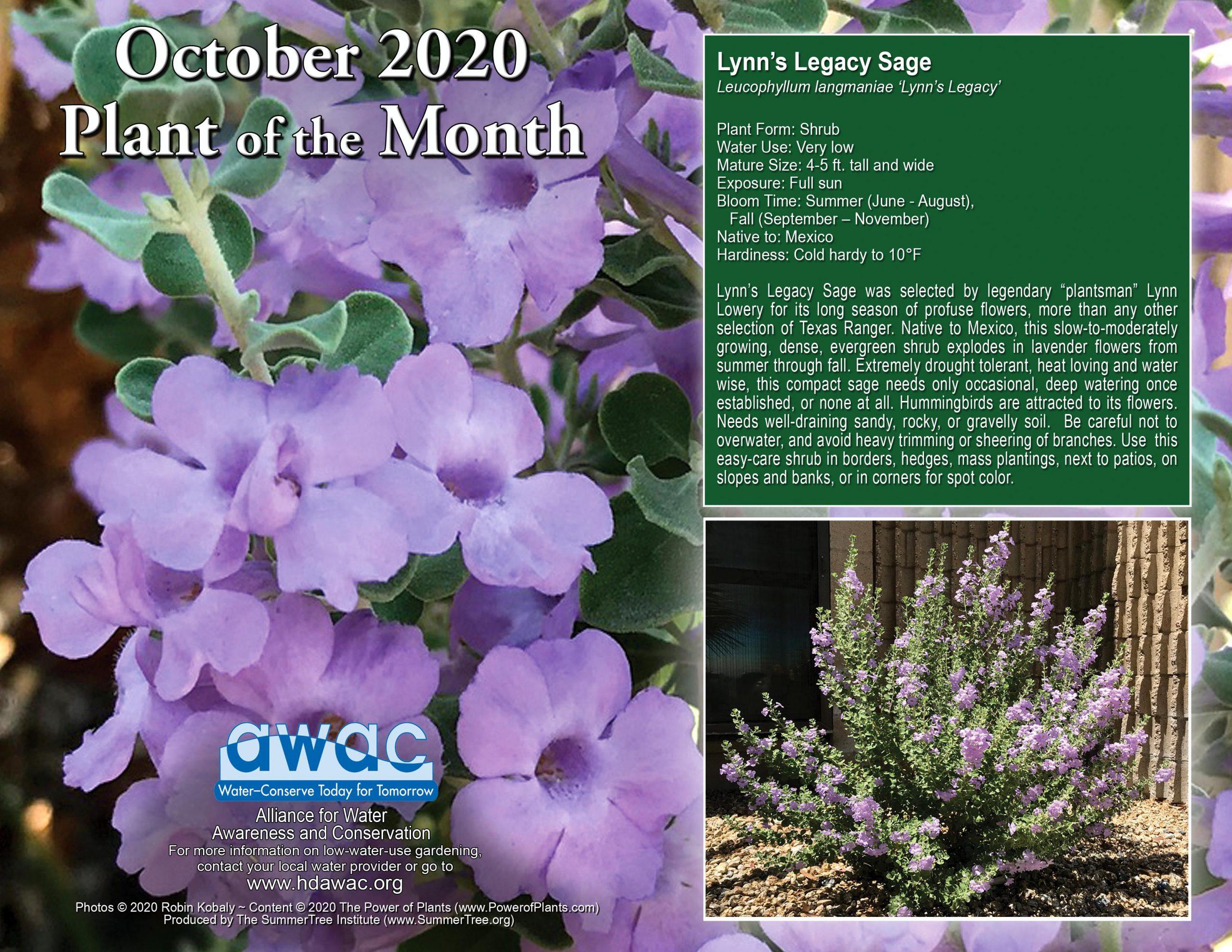 AWAC October