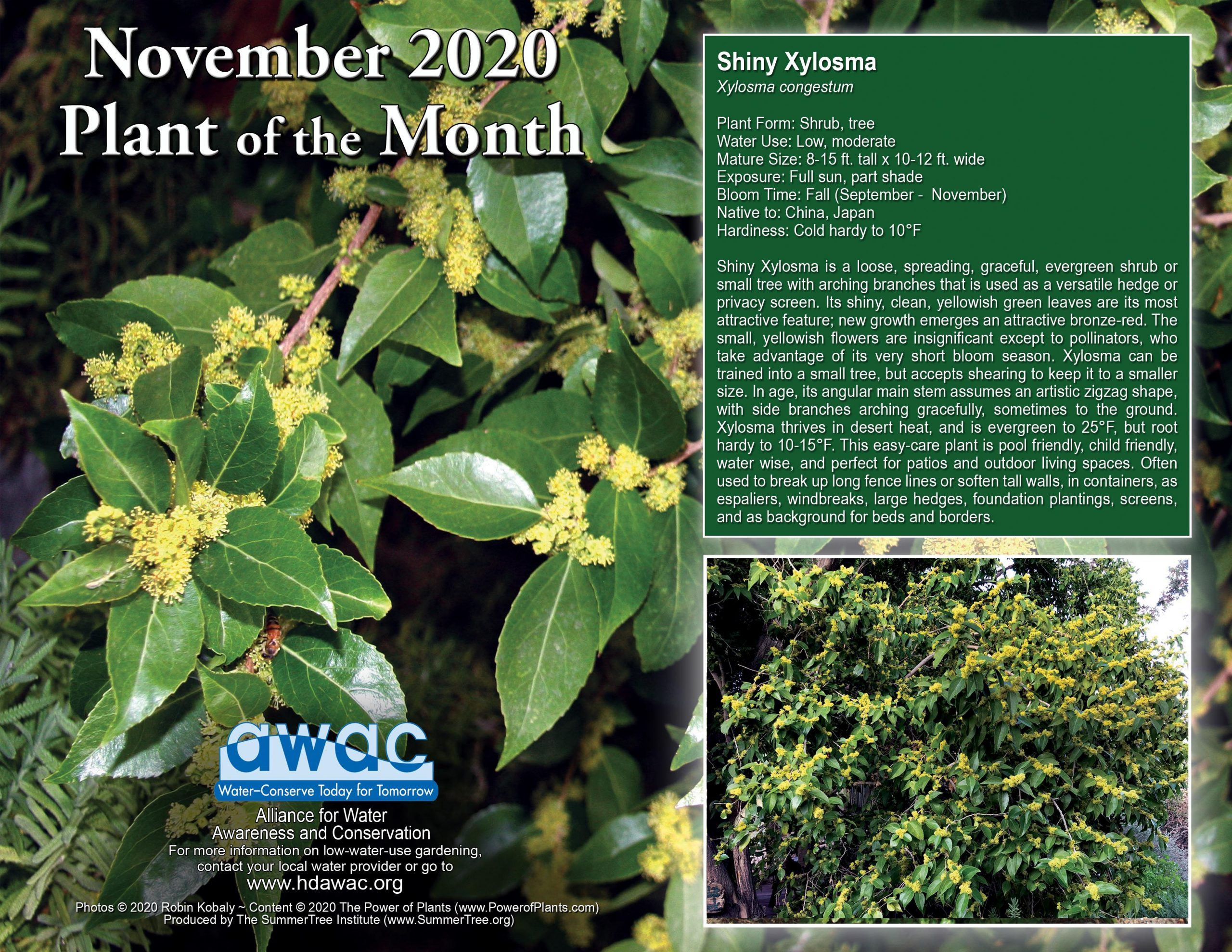 AWAC November 2020 Plant of the Month