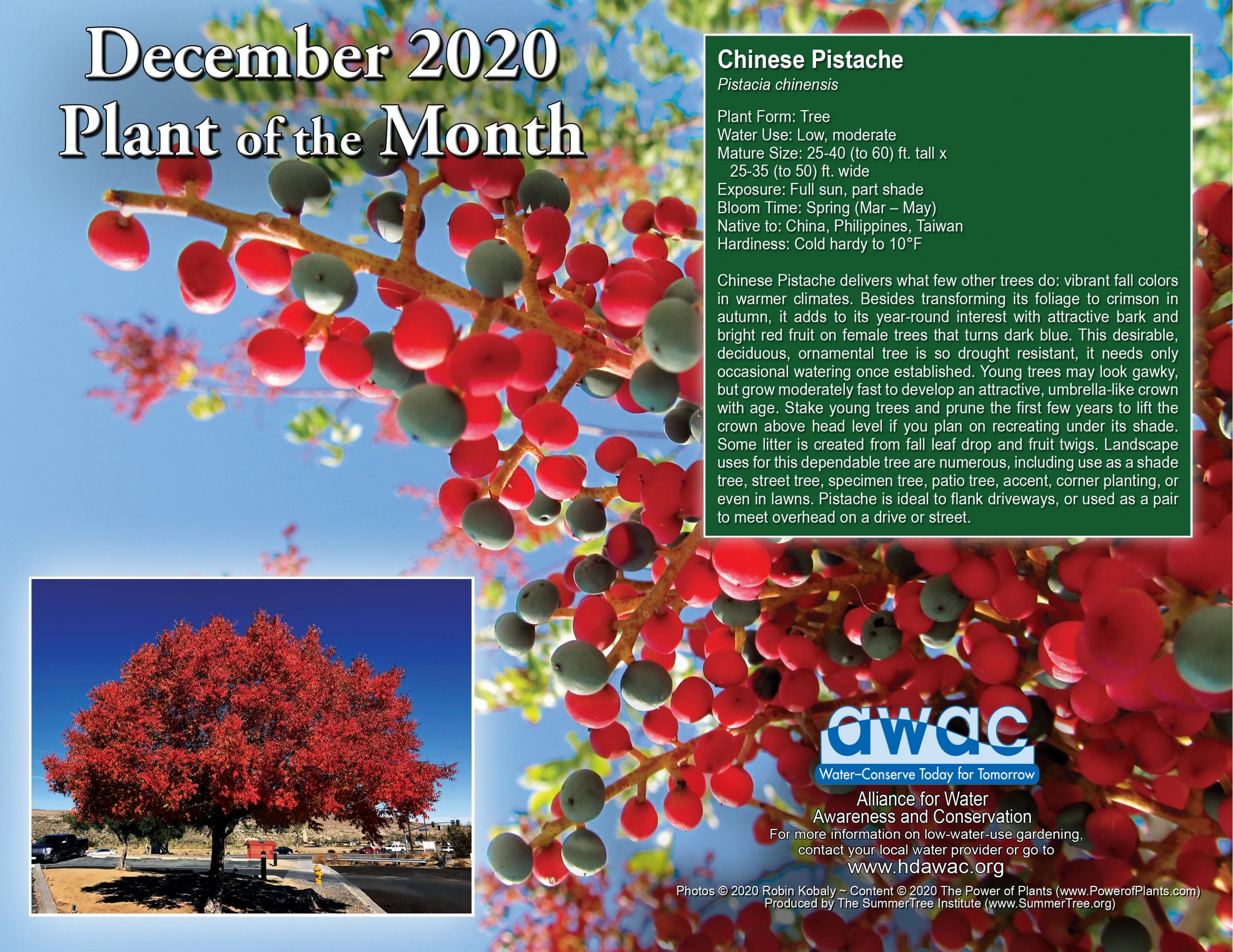 AWAC Dec 20 Plant of the Month
