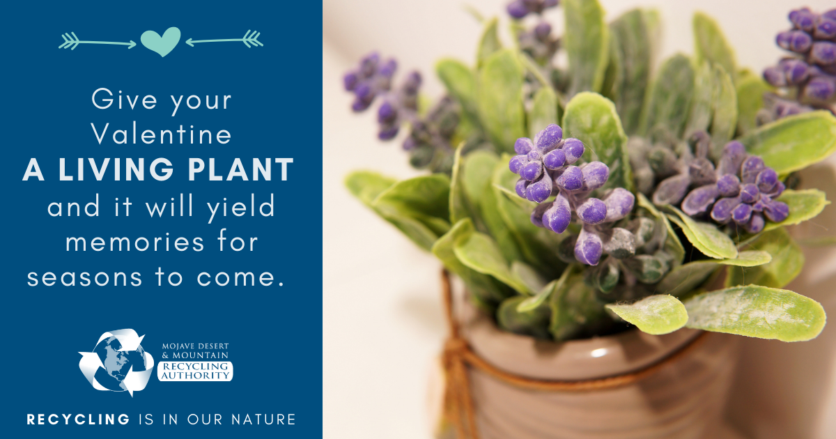 Valentines give living plants