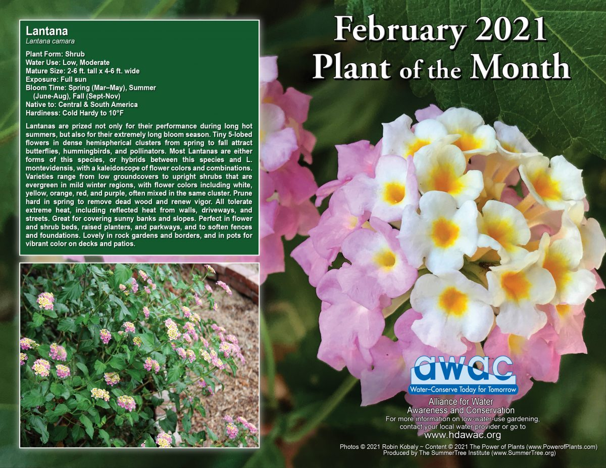 AWAC February 21 Plant of the Month