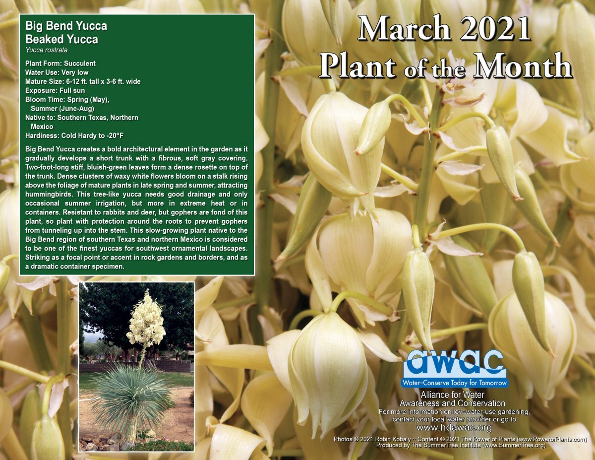 AWAC March 21 Plant of the Month