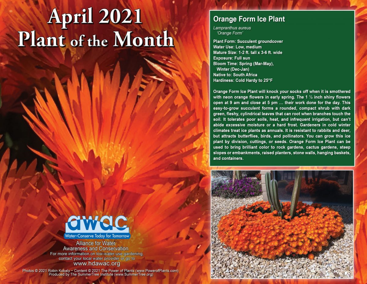 AWAC April 2021 Plant of the Month