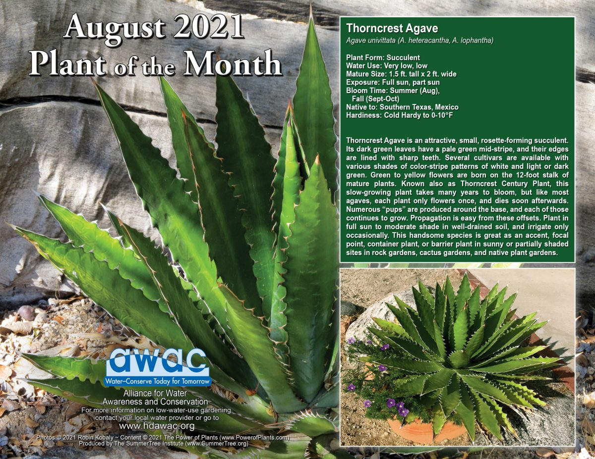 August 2021 Plant of the Month